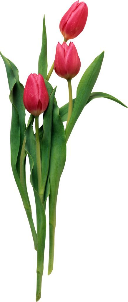 Доставка цветов спб синие розы