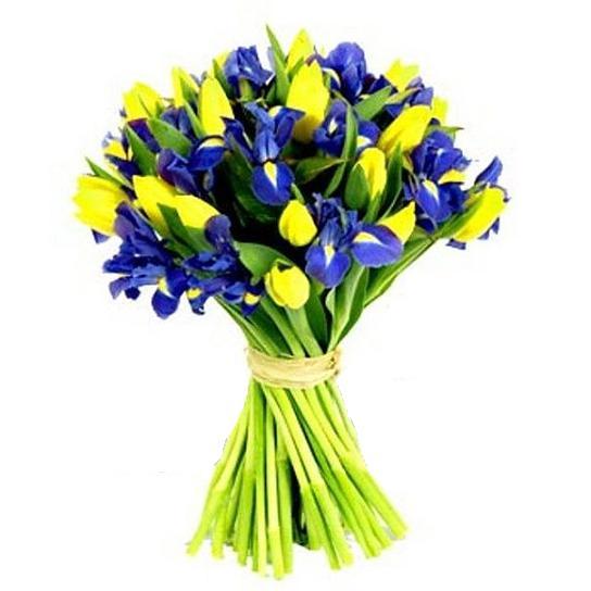 Цветы купить ирисы желтые цветы горшечные купить опт