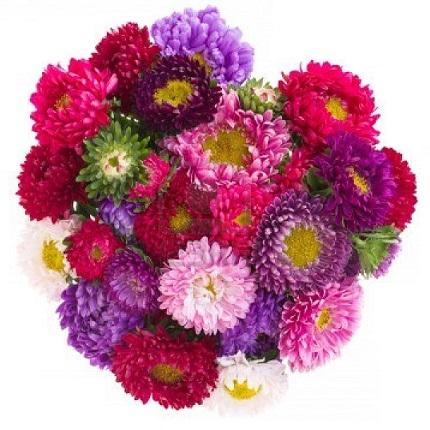 Доставка цветов астры духи цветы россии где купить в перми