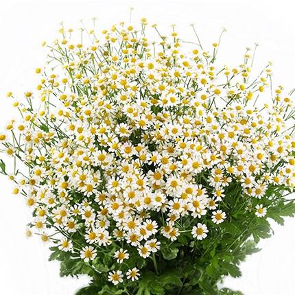 Доставка цветов санкт-петербург ромашки
