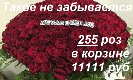 kupit-tsveti-nochyu-v-spb-deshevie-tsveti-darit-sentyabrya