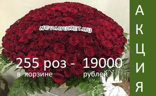 Доставка цветов мурманск санкт петербург дешево, флористика, цветы, букеты, оформление праздников