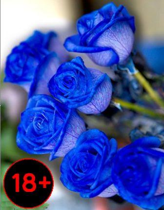 Купить синие цветы
