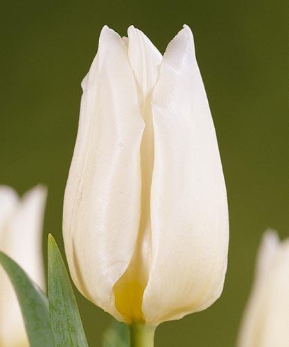 Заказ доставкой пулково цветы мелкий оптом тюльпаны высоком