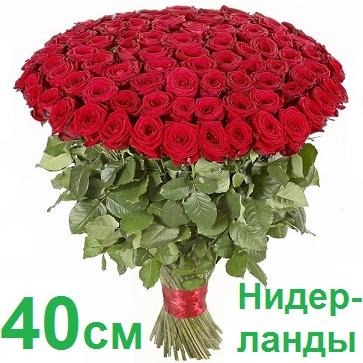 Голландские розы купить оптом в сочи доставка цветов по ульяновской области