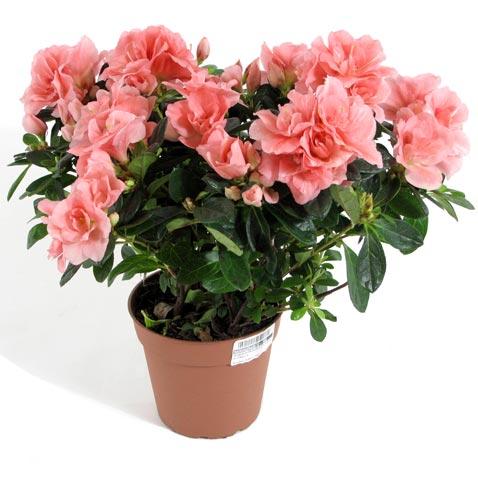 """материалы связанные с  """"заказать цветы для ребенка срочная доставка..."""
