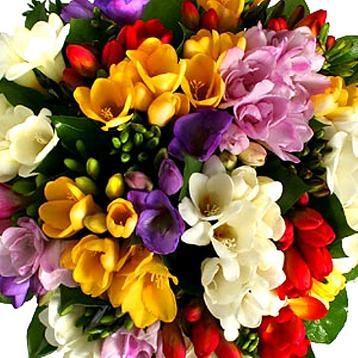 Фрезия цветы заказать