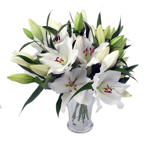Цветы фото белые лилии