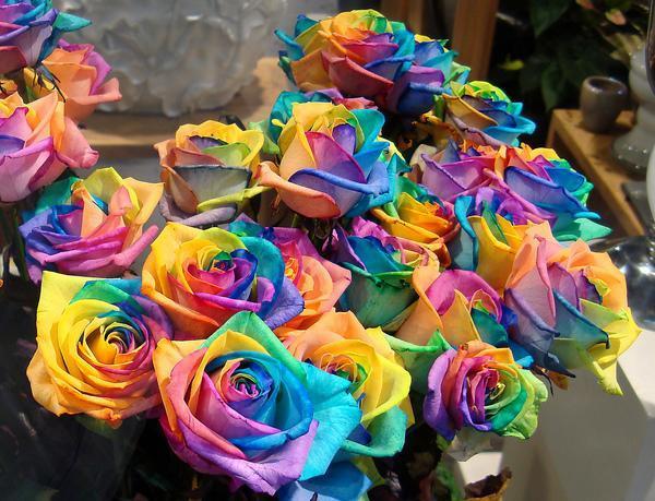 Розы радужные купить оригинальный подарок свекрови на юбилей 50 лет